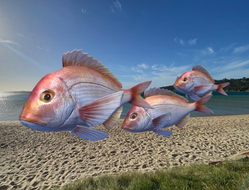 Augmented Reality Trail – Pinkies at Safety Beach